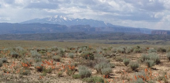 La Sal mountains in the background; the plains abloom in May.