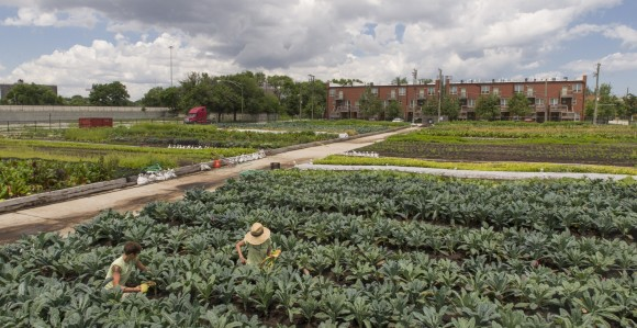 PHOTO: The Windy City Harvest's Legends Farm at 4500 S. Dearborn Street.