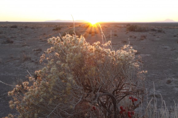 PHOTO: Lepidospartum burgessii, framed by the sunset.