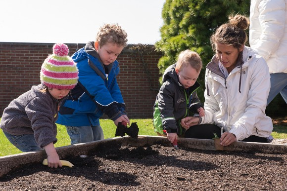 PHOTO: Little Diggers pea planting in the raised beds.