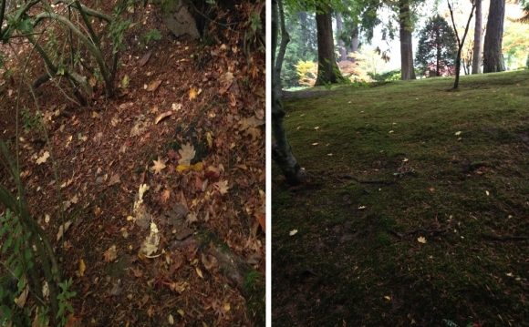 PHOTO: Clearing leaf litter promotes moss growth.
