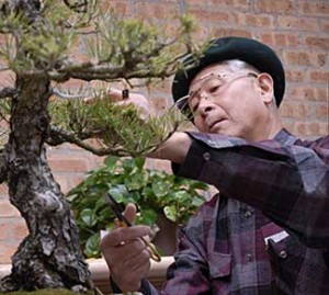 PHOTO: Susumu Nakamura trains a bonsai.