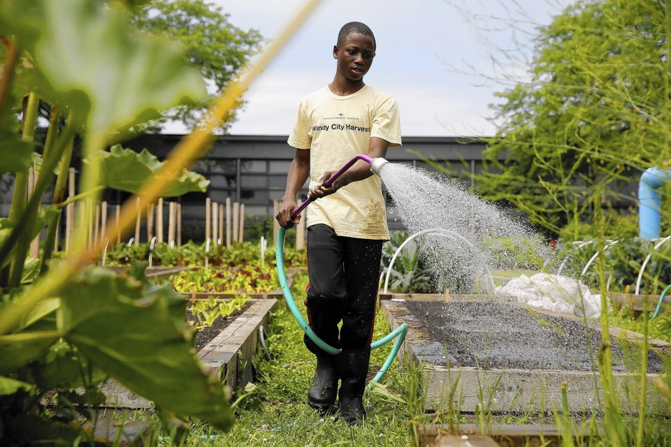 PHOTO: Windy City Harvest Youth Farm teen waters in the garden.
