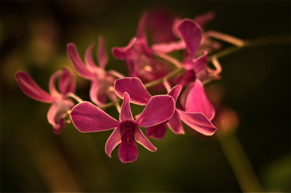 PHOTO: Orchid by Zak Yasin