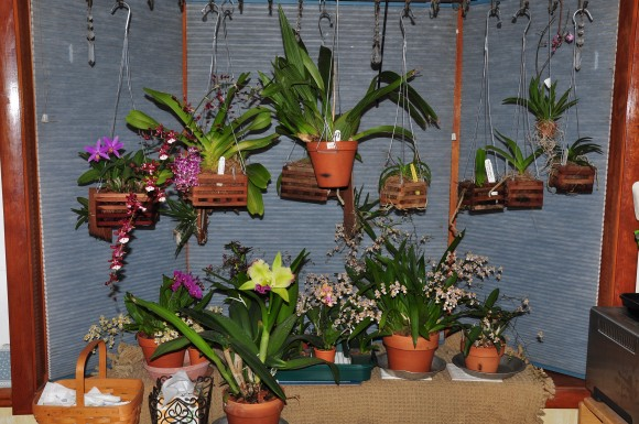 PHOTO: Orchids in kitchen window at Ault house.