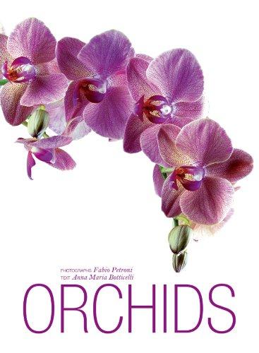 Orchids by Fabio Petroni and Anna Maria Botticelli