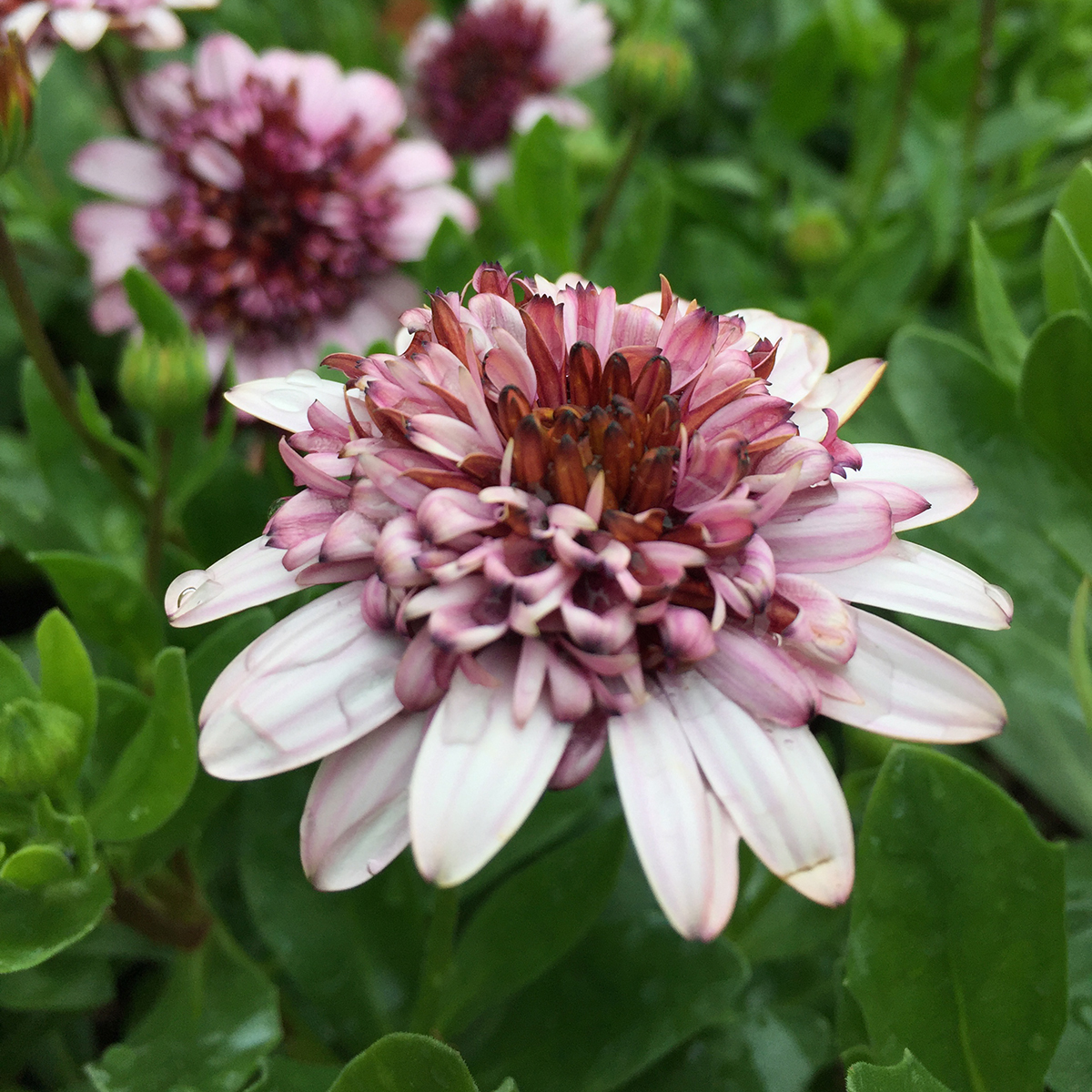 Protect Spring Plantings When Cold Returns