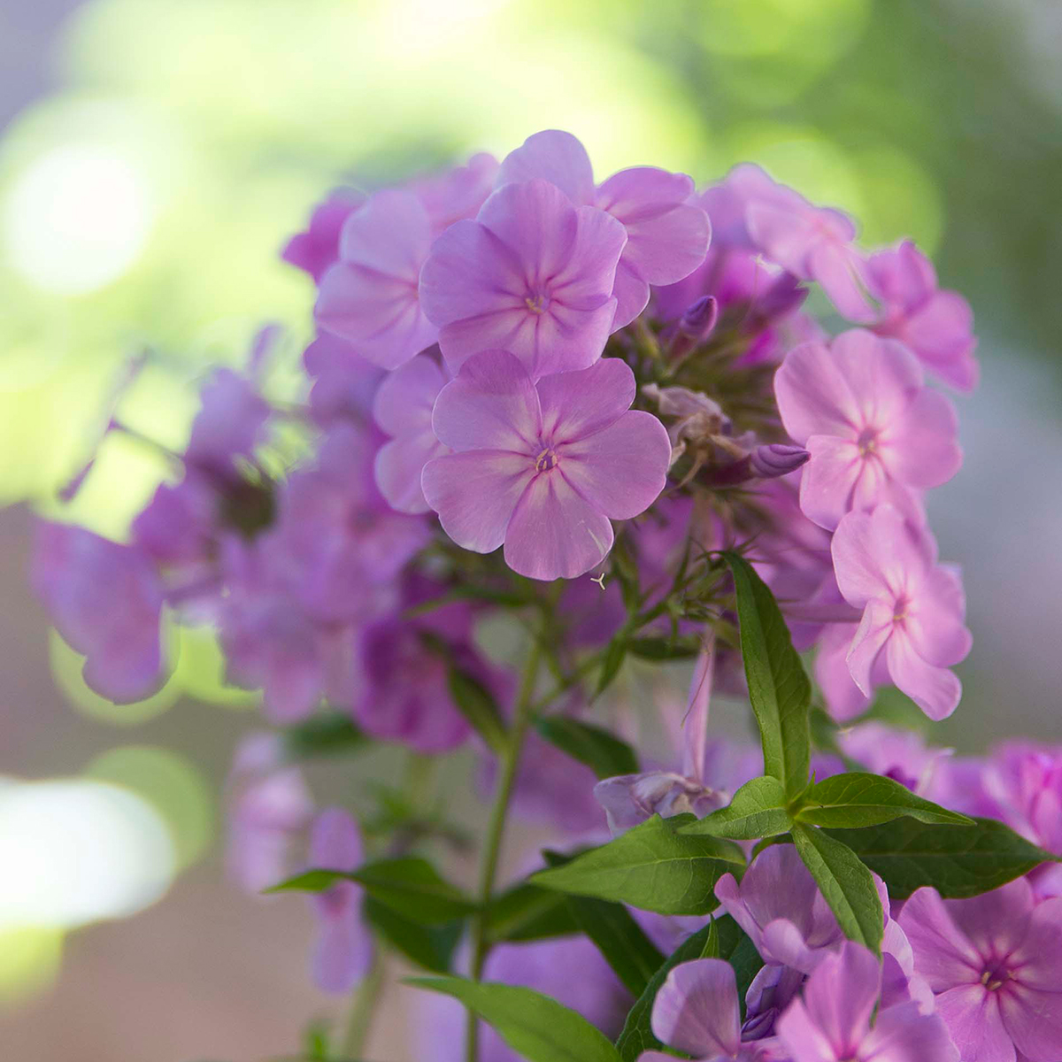 Use Fragrant Plants for a Breathtaking Garden
