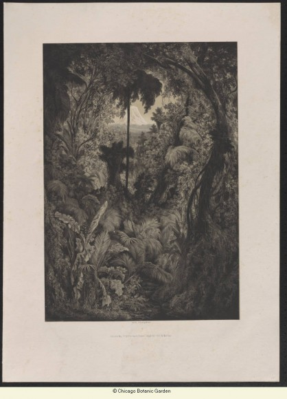 """ILLUSTRATION: Bookplate from """"Physiognomy of Tropical Vegetation in South America"""""""