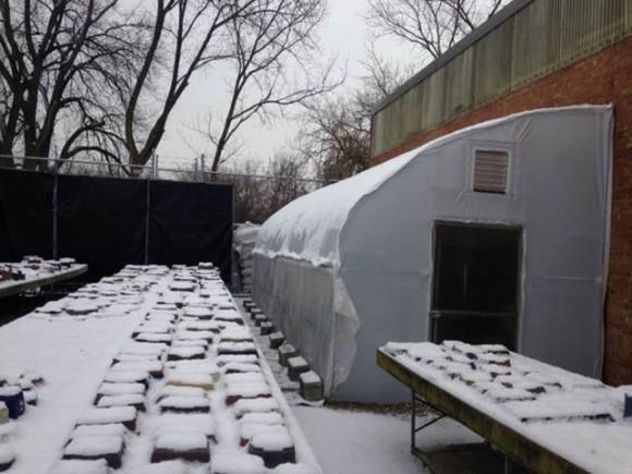 Snow on quonset.