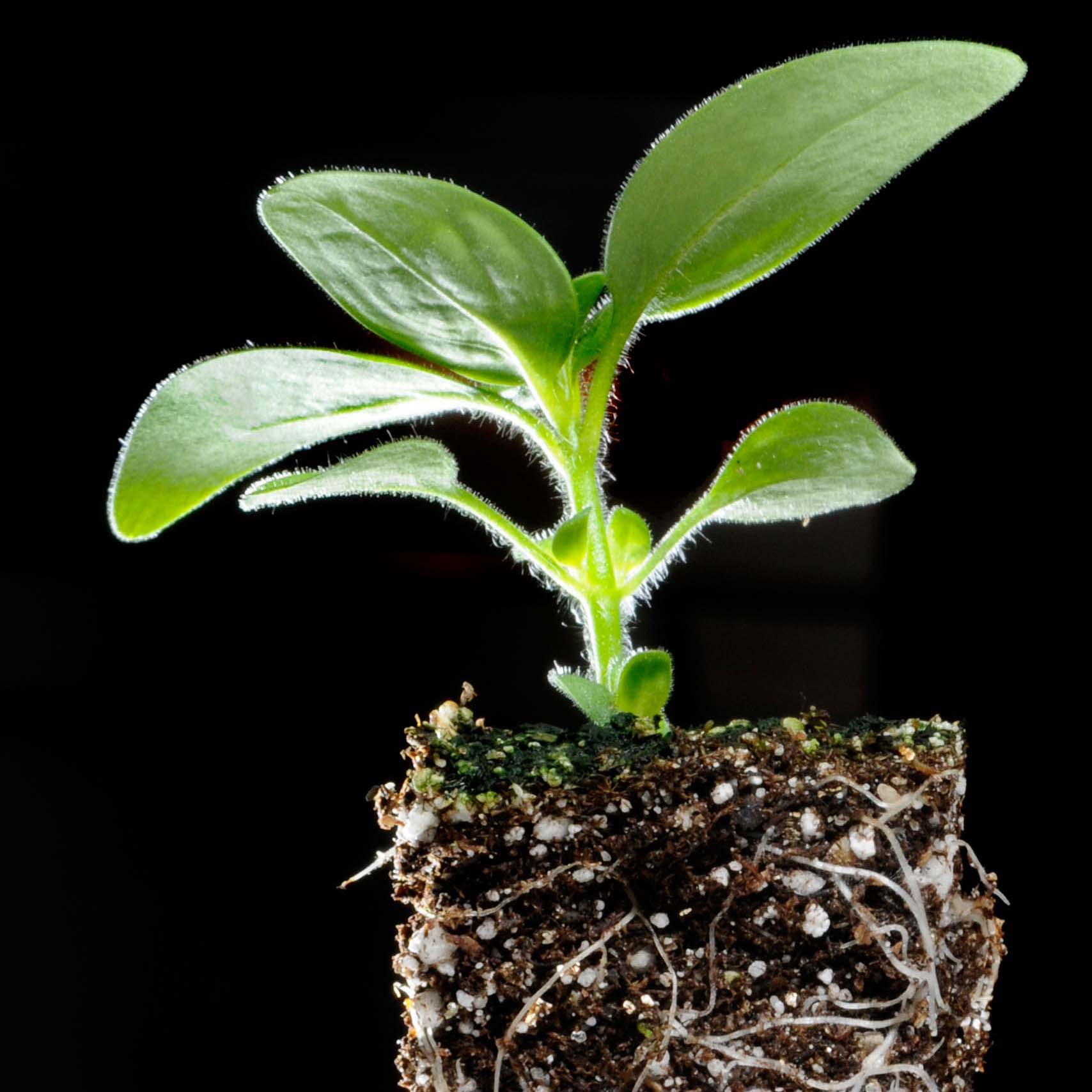 PHOTO: Plant and roots.