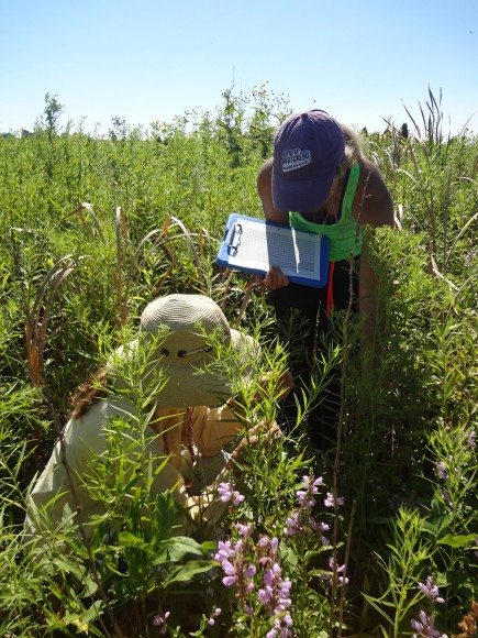 PHOTO: Poring over a specimen in the field.