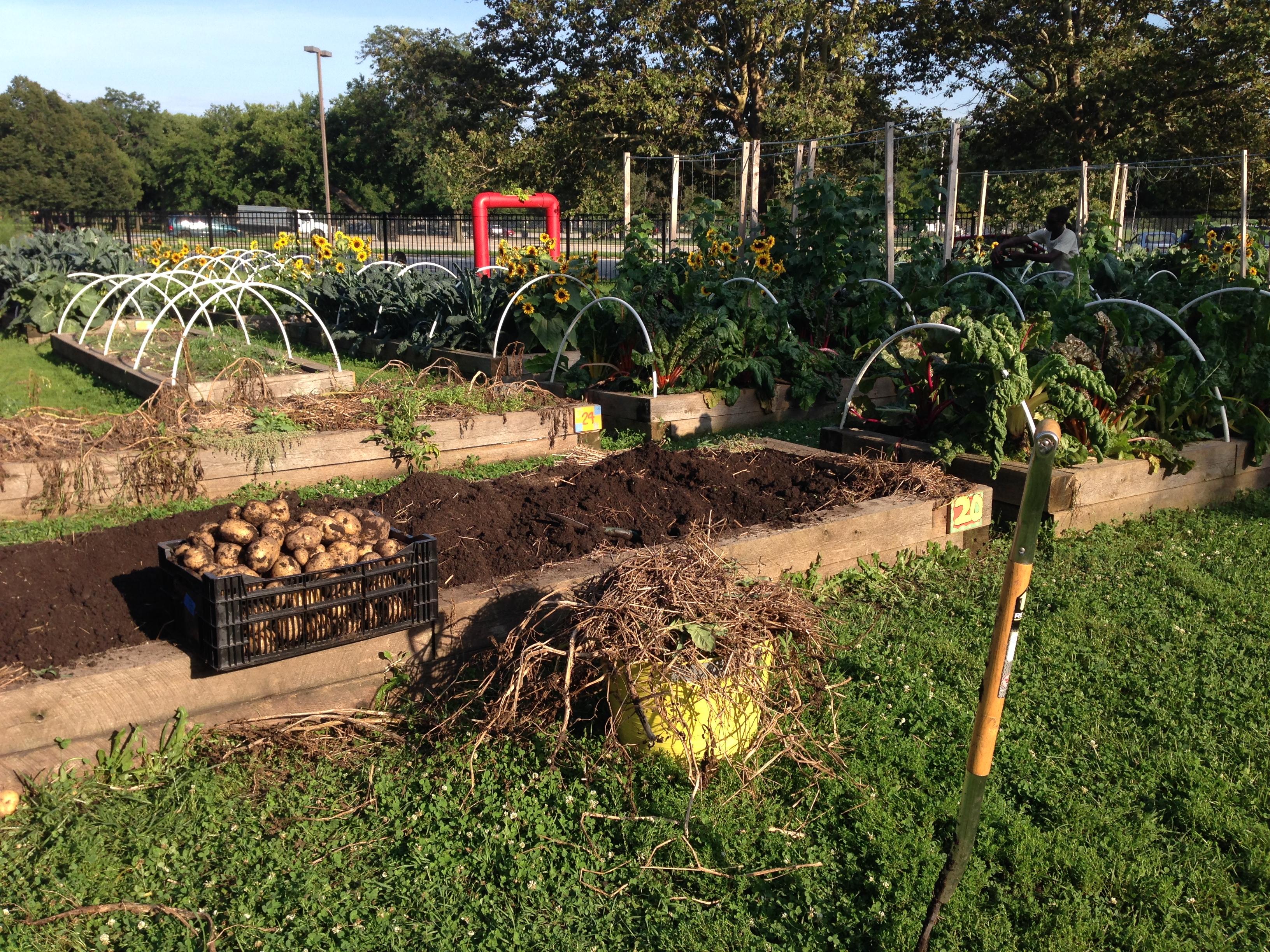 Community Gardening | Chicago Botanic Garden