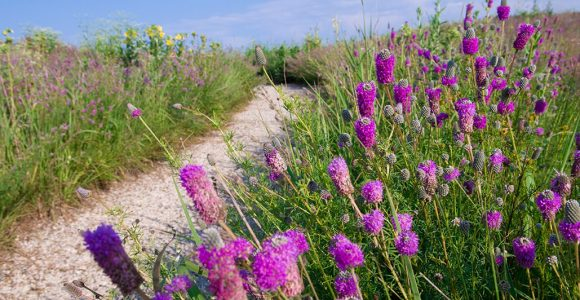 The Dixon Prairie in July