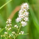 PHOTO: Prairie plant.
