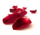 PHOTO: Rose petals