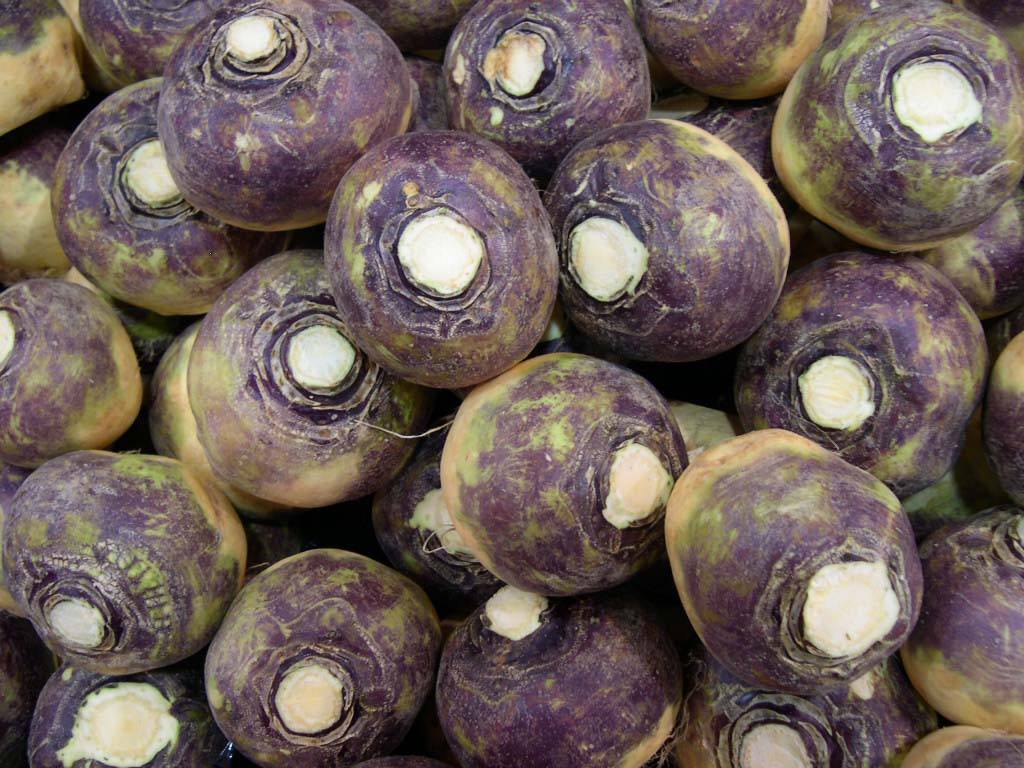 PHOTO: Rutabaga, or Swede.