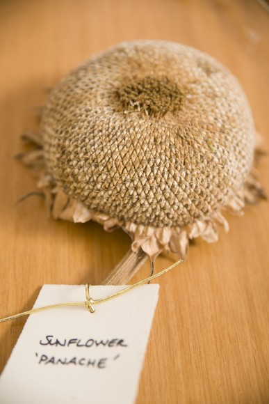 PHOTO: A dried sunflower head.