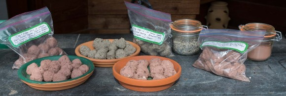 PHOTO: Seed balls made with different recipes.