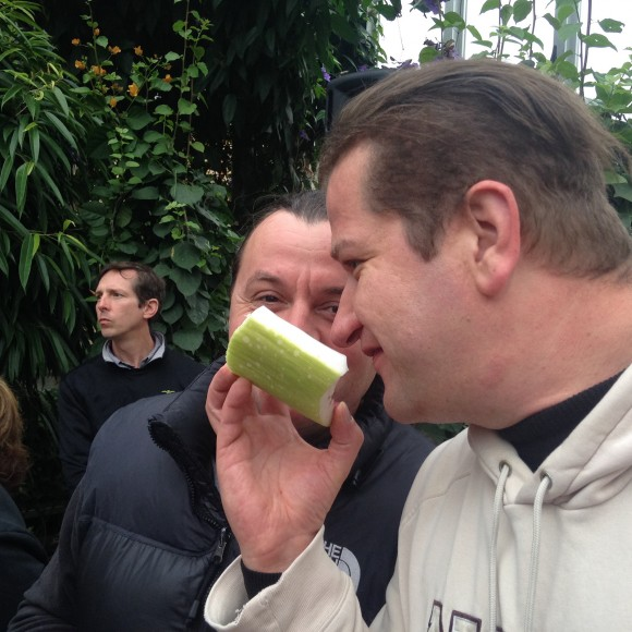 A visitor from the Czech Republic sniffs the window removed from the spathe for Sprout the corpse flower's pollination.