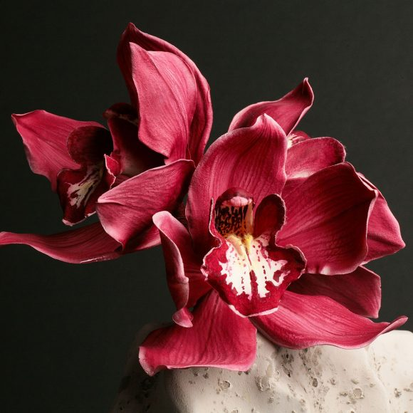 Sugar Cymbidium orchid by Robert Haynes. Photo ©Tony Harris