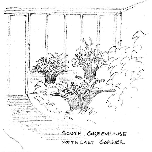Sketch of planter layout for the Orchid Show at the Chicago Botanic Garden.