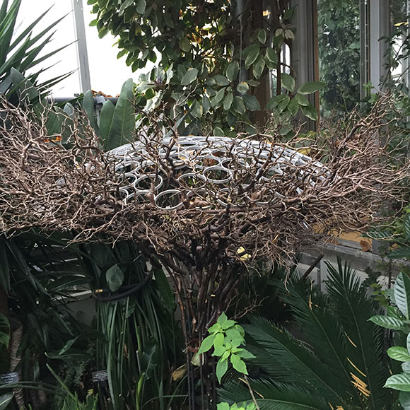 Manzanita branches cover the framework of the planters for the Chicago Botanic Garden's Orchid Show.
