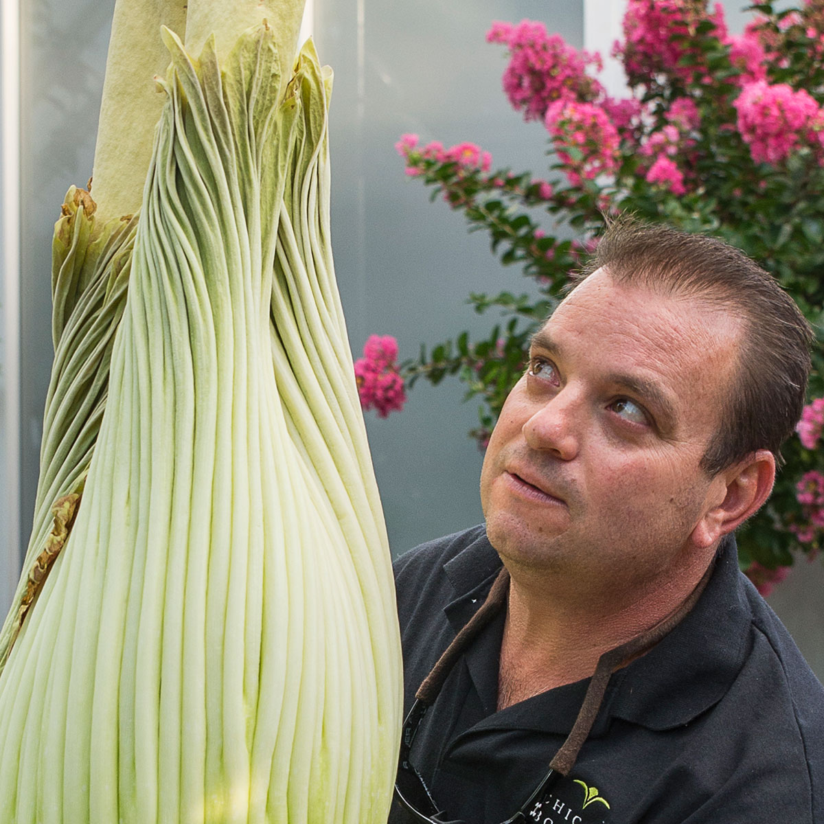 Care and Feeding for a Giant Bloom