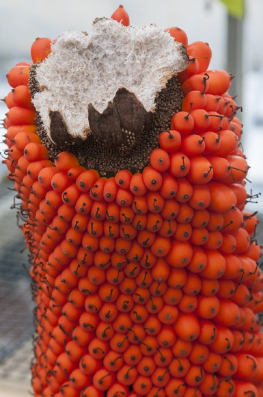 The remains of the spadix have been removed—showing its fibrous interior—as the titan arum's fruit continues to mature.
