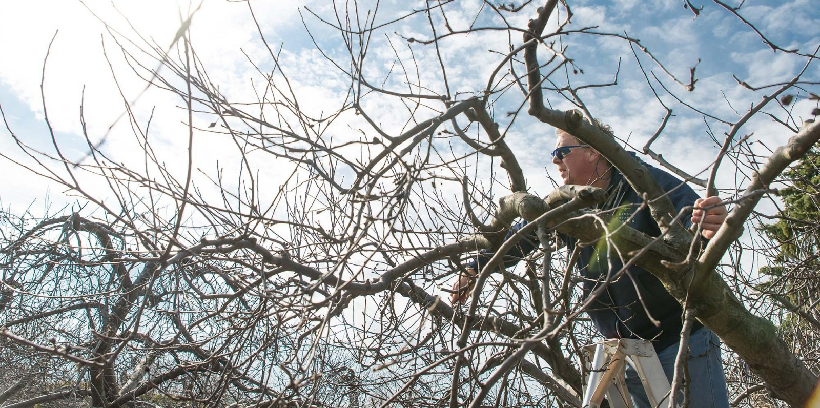 Time to Prune the Apple Orchard