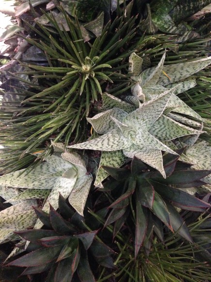 Topiary tree detail