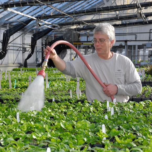 PHOTO: Garden volunteer Lauren waters lettuce seedlings in the greenhouses.