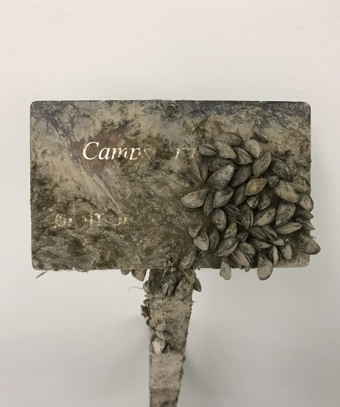 PHOTO: Waterfall Garden label covered in zebra mussels.