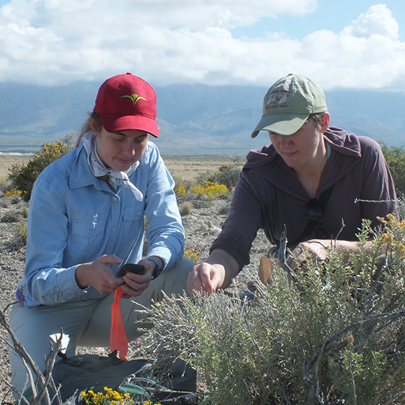 Evelyn Williams Ph.D. (left, with Adrienne Basey) traveled to Guadalupe Nation Park in Texas to study the shrub Burgess' Scalebroom.