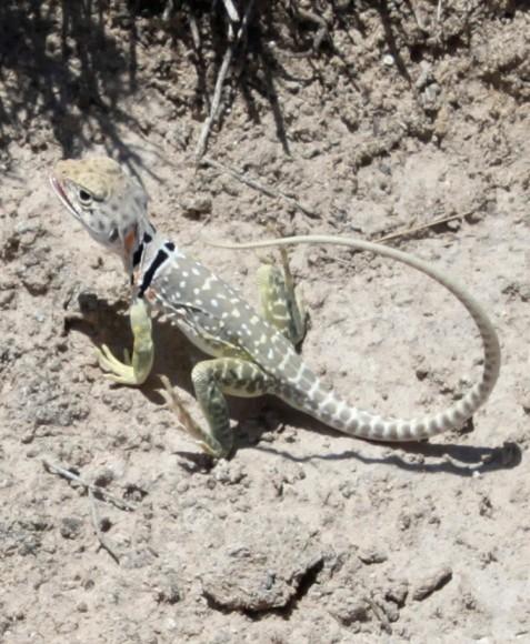 PHOTO: A cute lizard.