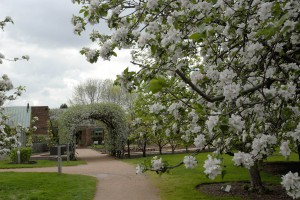 PHOTO: the apple archway in full bloom.