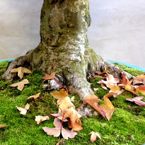 Overwintering Your Bonsai
