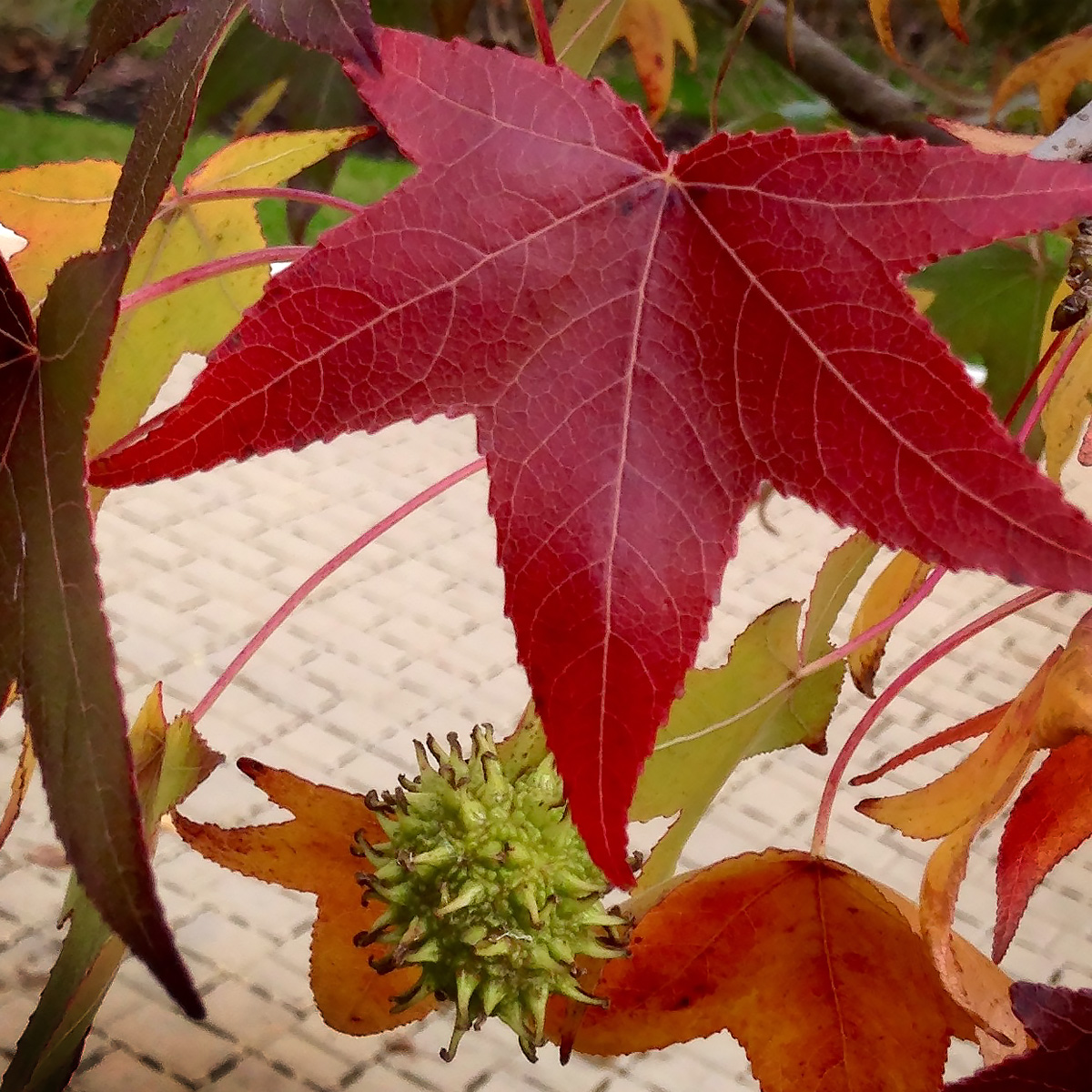 Wanted: Leaf Peepers for Science