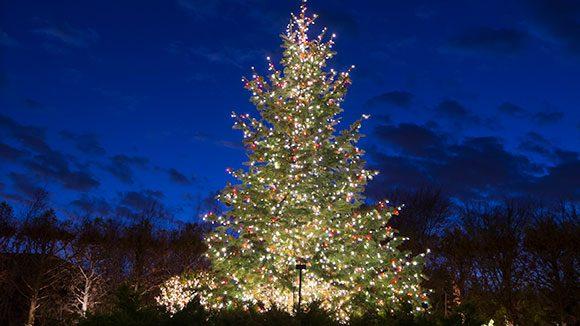 christmas_tree_on_esplanade