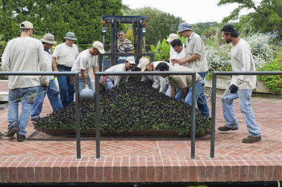 PHOTO: A team of 12 people (and a forklift driver) place a panel in the Heritage Garden.