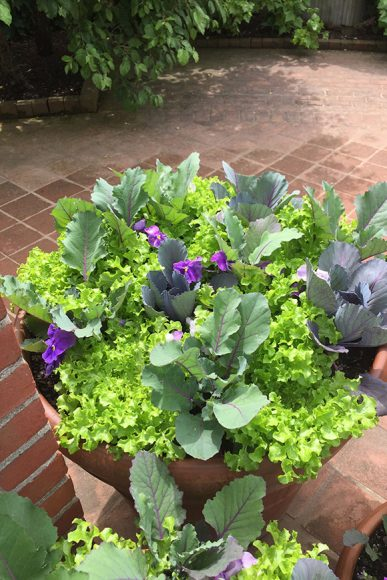 PHOTO: Planter potted up with edible greens.