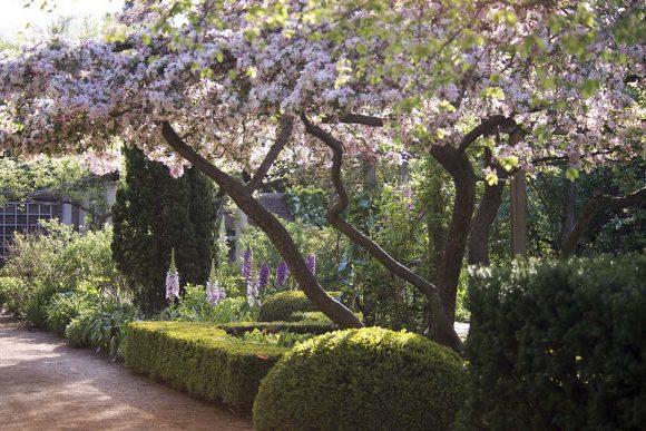 English Walled Garden (at Chicago Botanic Garden) in May