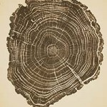 This print of an English Oak was made from a tree that once stood on the outer road at the Garden.