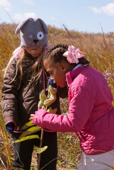PHOTO: Two girls are looking closely at a milkweed plant that has about eight green seed pods.