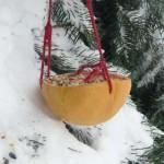 Grapefruit feeder