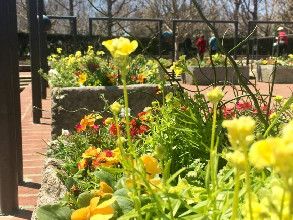 The bright, colorful troughs in the Heritage Garden welcome visitors every Spring.