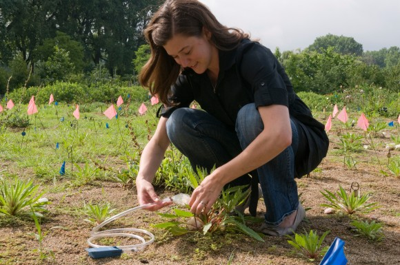 Dr. Skogen sets up floral-scent collection equipment for a previous experiment at the Garden.