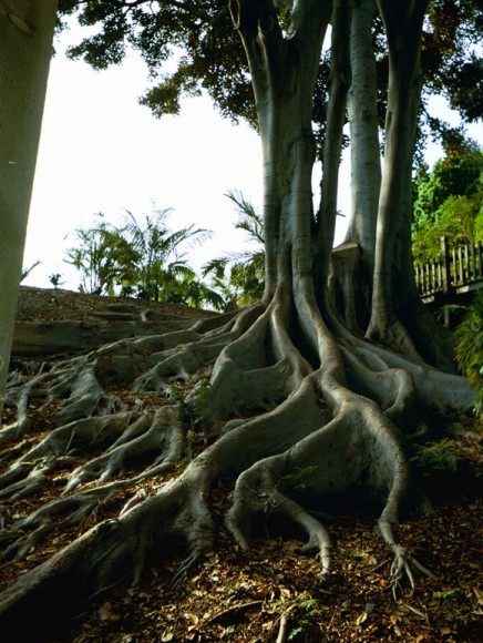 tree roots.