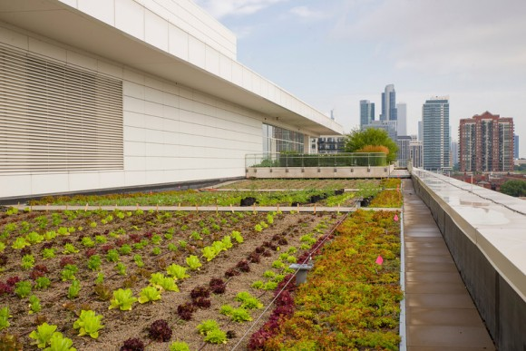 PHOTO: More of McCormick Place West, this time planted with vegetables