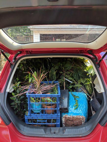 Weaver's trunk-load of houseplants.